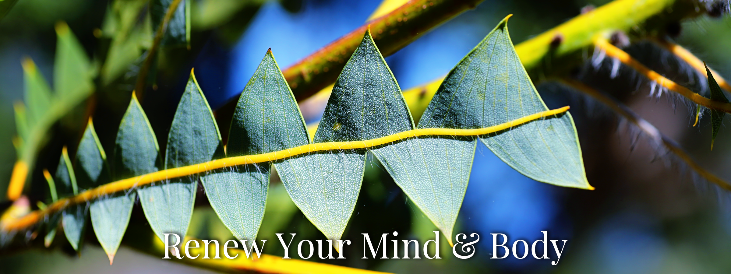 Renew Your Mind and Body